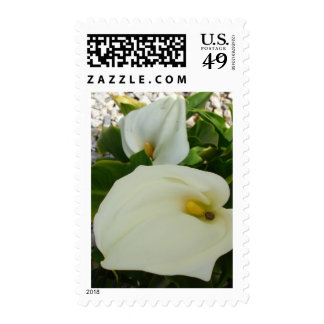 Overhead View Of Two Calla Lilies In A Garden Postage Stamp