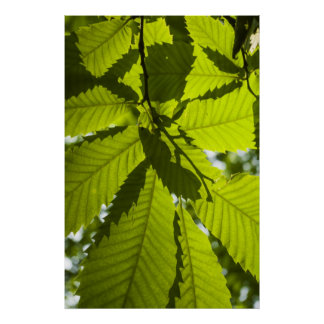 Overlapping leaves posters