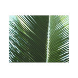 Overlapping Palm Fronds Tropical Green Abstract Metal Photo Print
