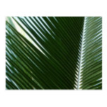 Overlapping Palm Fronds Tropical Green Abstract Postcard