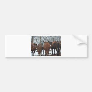 Overlook Grand Canyon National Park Mule Ride Bumper Sticker