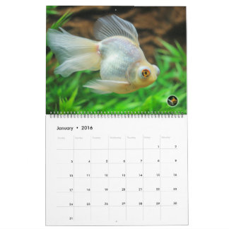 Oversized 2016 SOLID GOLD Goldfish Calendar