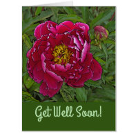 OVERSIZED CARD/GET WELL /FUCHSIA-COLORED PEONY