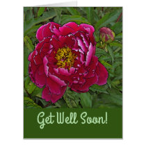 OVERSIZED CARD/GET WELL /FUCHSIA-COLORED PEONY CARD