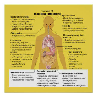 Overview of Bacterial Infections Poster