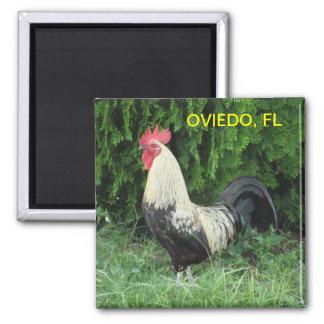 OVIEDO CHICK MAGNET