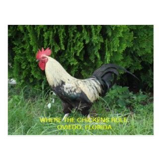 Oviedo Chickens Postcard