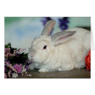 Owen the Rabbit Card
