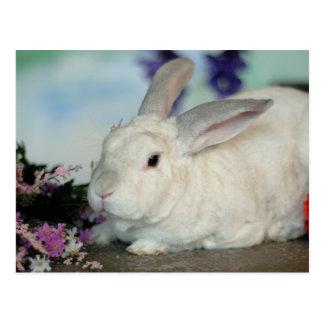 Owen the Rabbit Postcard