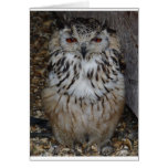 owl1 cards