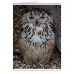 owl1 felicitaciones