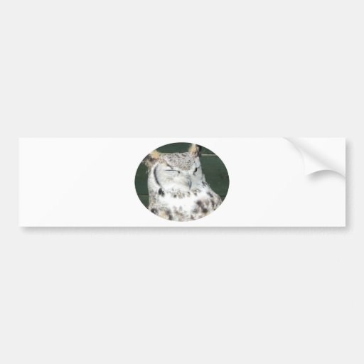 Owl 1 bumper sticker