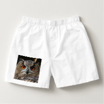 Owl_20180202_by_JAMFoto Boxers