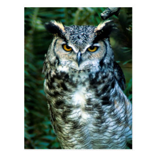 Owl (2) postcard