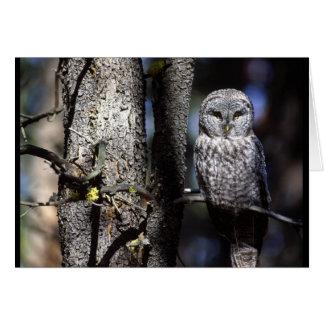Owl (3) card