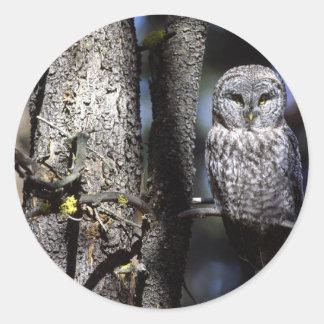 Owl (3) classic round sticker
