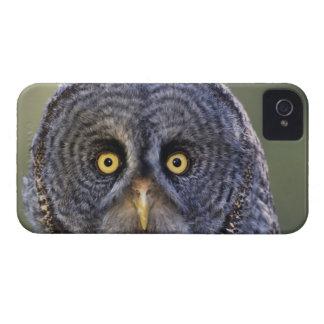 Owl 3 iPhone 4 Case-Mate case