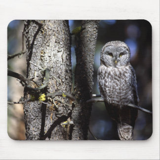 Owl (3) mouse pad