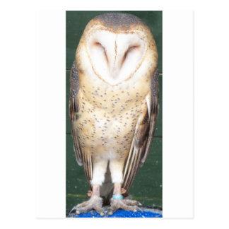 Owl 4 postcard
