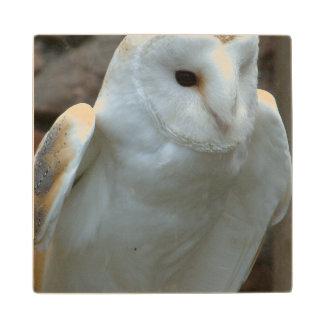 owl-51.jpg wood coaster