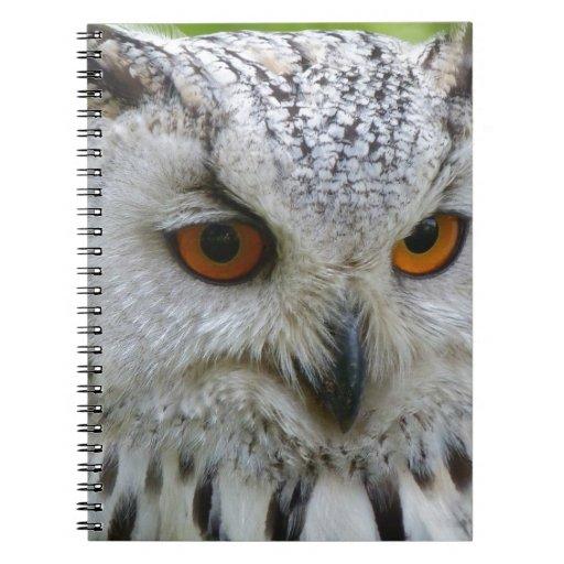 owl-62703_1920.jpg cuadernos