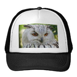owl-62703_1920.jpg gorra