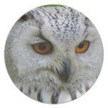 owl-62703_1920.jpg platos
