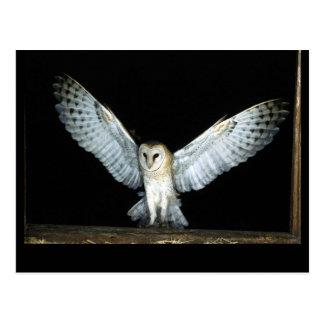 Owl (6) postcard