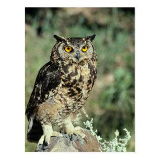 Owl (9) postcard