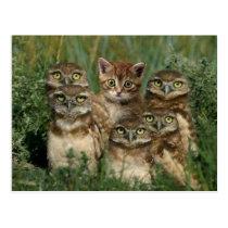 owl and kitten postcard