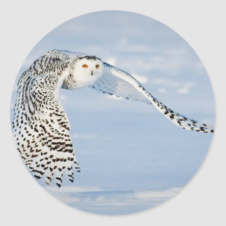 Owl Animal Bird Winter Snow Frozen Ice Cold Classic Round Sticker