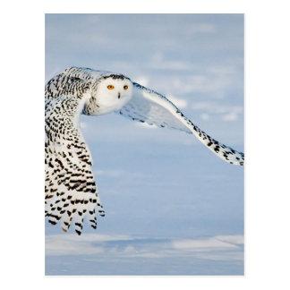 Owl Animal Bird Winter Snow Frozen Ice Cold Postcard