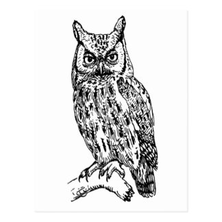 owl b/w collection postcard