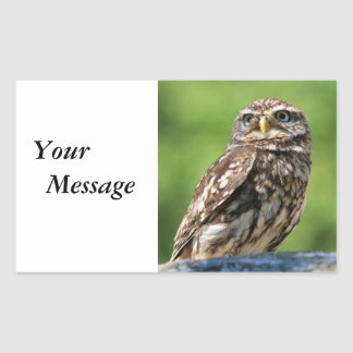 Owl beautiful photo custom stickers