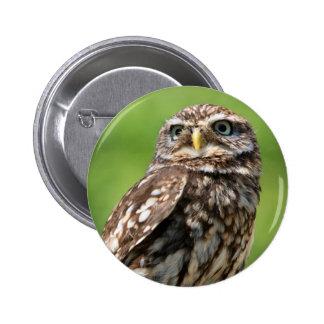Owl beautiful photo portrait button, pin