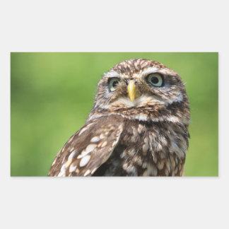 Owl beautiful photo  sticker, stickers