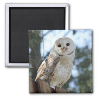 Owl Bird Animal Feathers Nature Peace Love Destiny Magnet