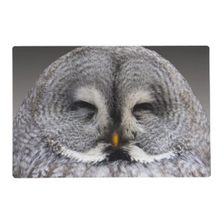 Owl Bird Animal Wings Flight Feathers Placemat