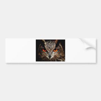 Owl Bird Eyes Face Outback Destiny Nature Car Bumper Sticker