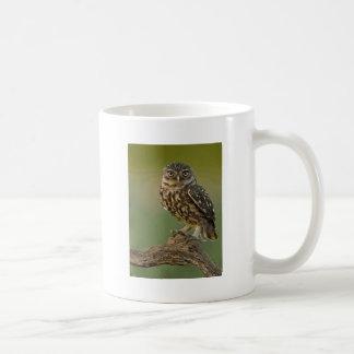Owl Bird Eyes Tree Mugs