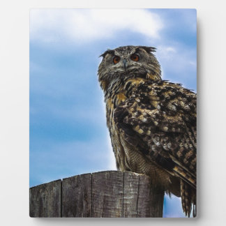 Owl Bird Feathers Animal Nature Destiny Peace Love Plaques