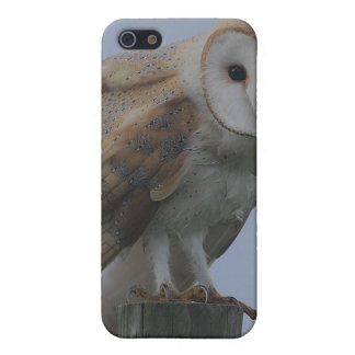 Owl Bird Feathers Animal Nature Peace Love Destiny Cover For iPhone SE/5/5s