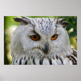 Owl Bird Feathers Animal Safari Peace Love Destiny Poster