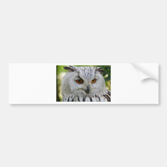 Owl Bird Feathers Destiny Gifts Bumper Sticker