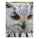 Owl Bird Feathers Destiny Gifts Personalized Letterhead