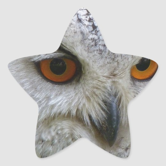 Owl Bird Feathers Destiny Gifts Star Sticker