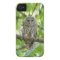 owl   Bird Tree green add text iPhone 4 Case-Mate Case