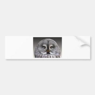 Owl Birds Feathers Party Shower Teacher Class Art Bumper Stickers