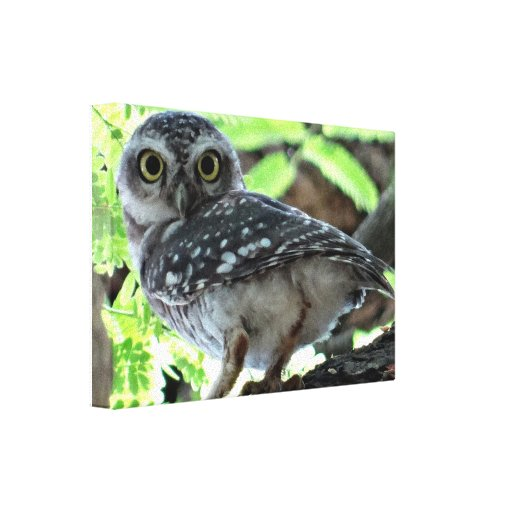 Owl Birds Woodland Branches Nature Animals Gallery Wrap Canvas