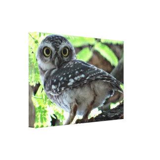 Owl Birds Woodland Branches Nature Animals Canvas Print